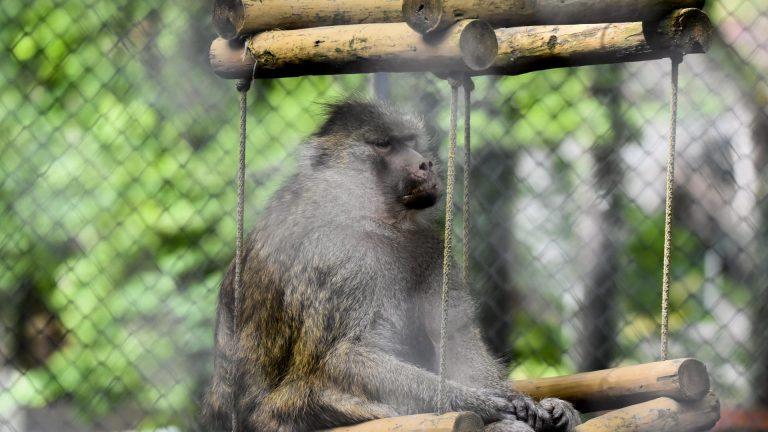 Zoo Resita (50 of 99)