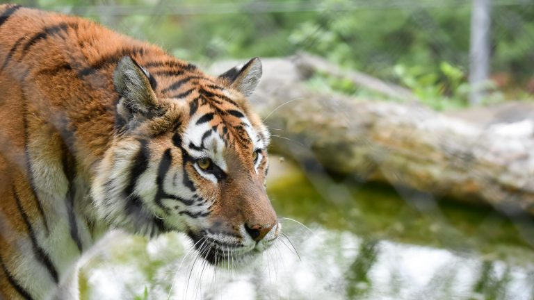 Zoo Resita (54 of 99)