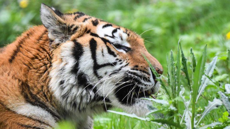 Zoo Resita (65 of 99)