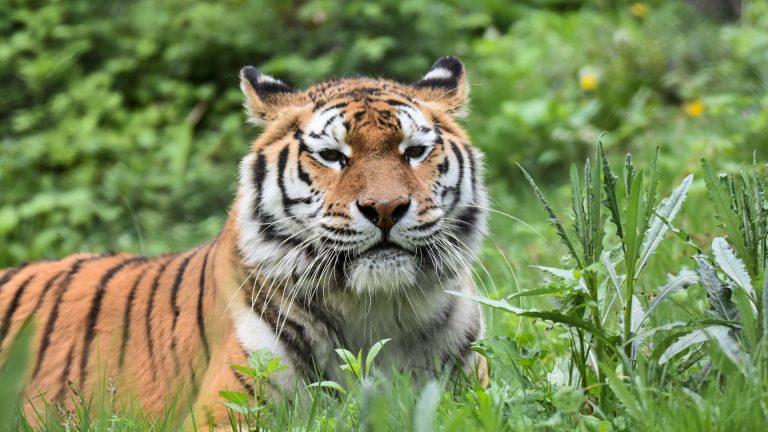 Zoo Resita (66 of 99)