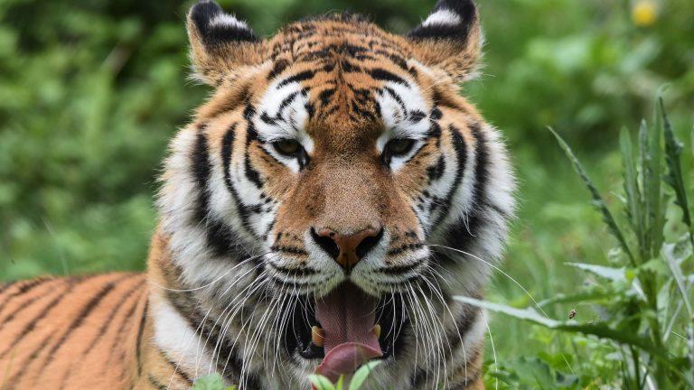 Zoo Resita (68 of 99)