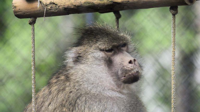 Zoo Resita (51 of 99)