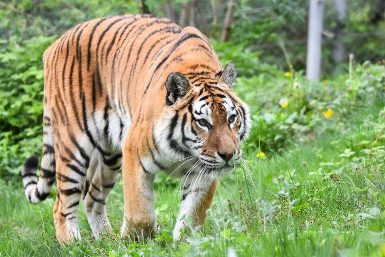 Zoo Resita (61 of 99)