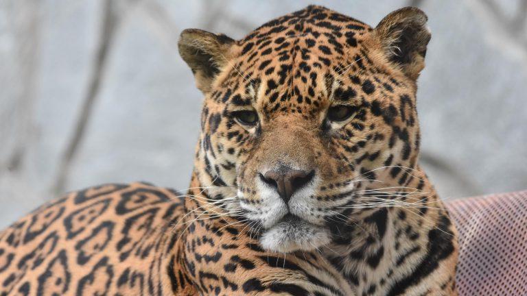 Zoo Resita (77 of 99)